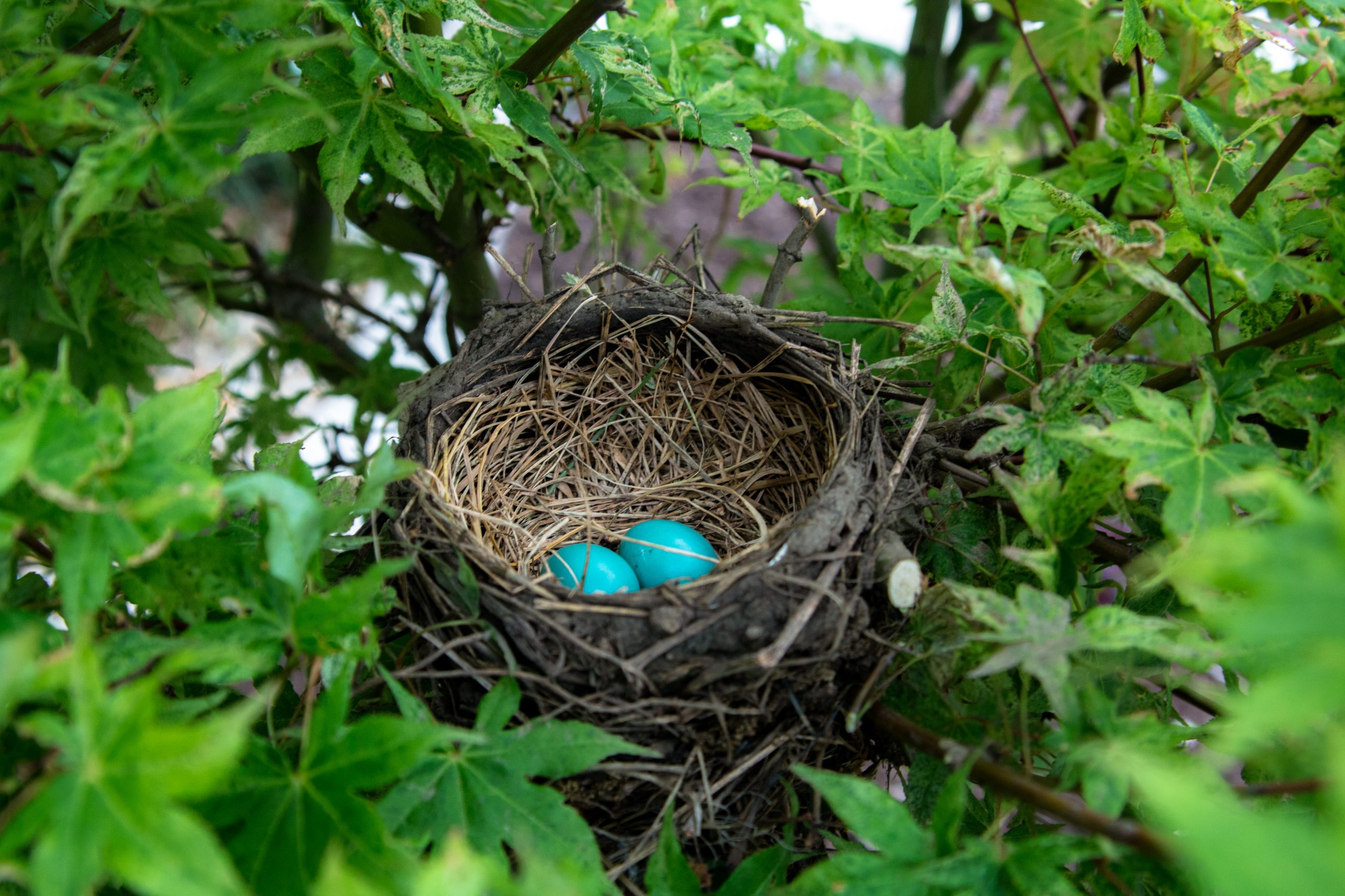 Using a Birdnesting Schedule to Insulate Children from Parental Conflict During Divorce